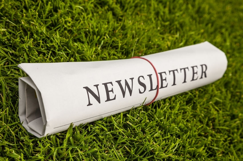 newsletter - newsletter newspaper on a green meadow